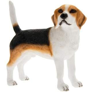 Beagle -patsas