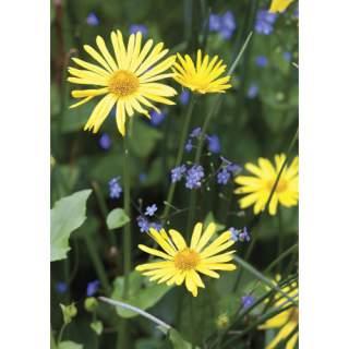 Keltaiset kukat -kortti