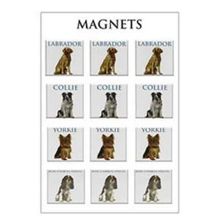 Koira -magneetit lajitelma