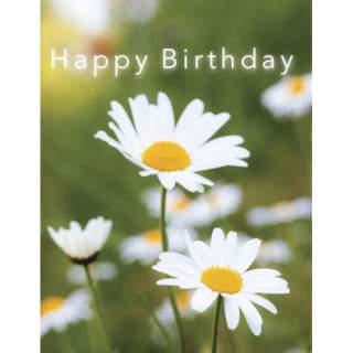 Happy Birthday -kortti Päivänkakkarat